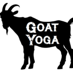 goat yoga - preview